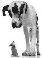 Perros enano y gigante